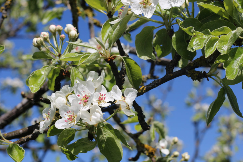 Frühling Baumblüte