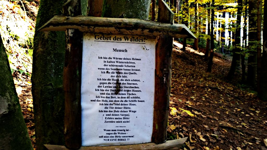Gebet des Waldes 2