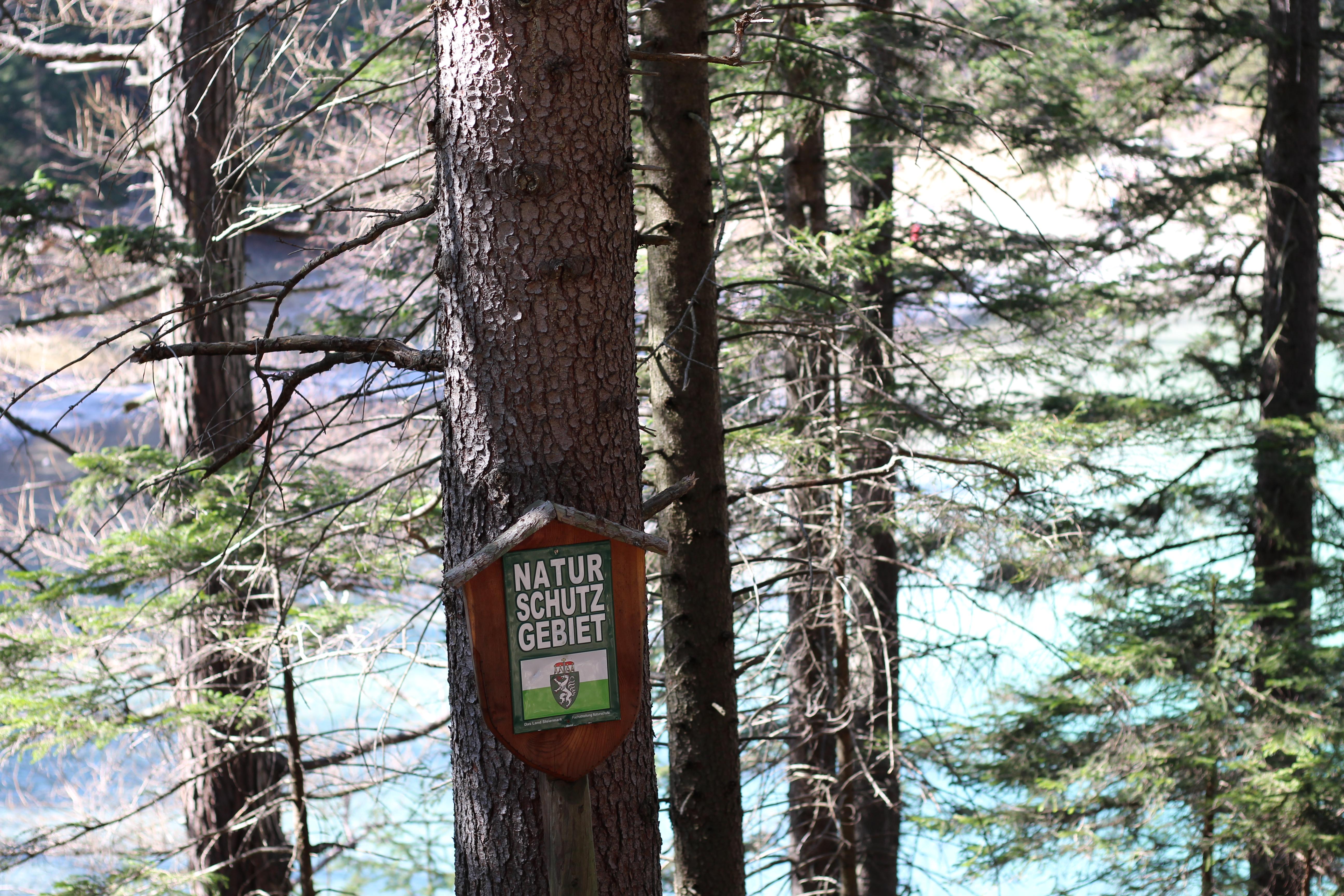 Grüner See Naturschutzgebiet