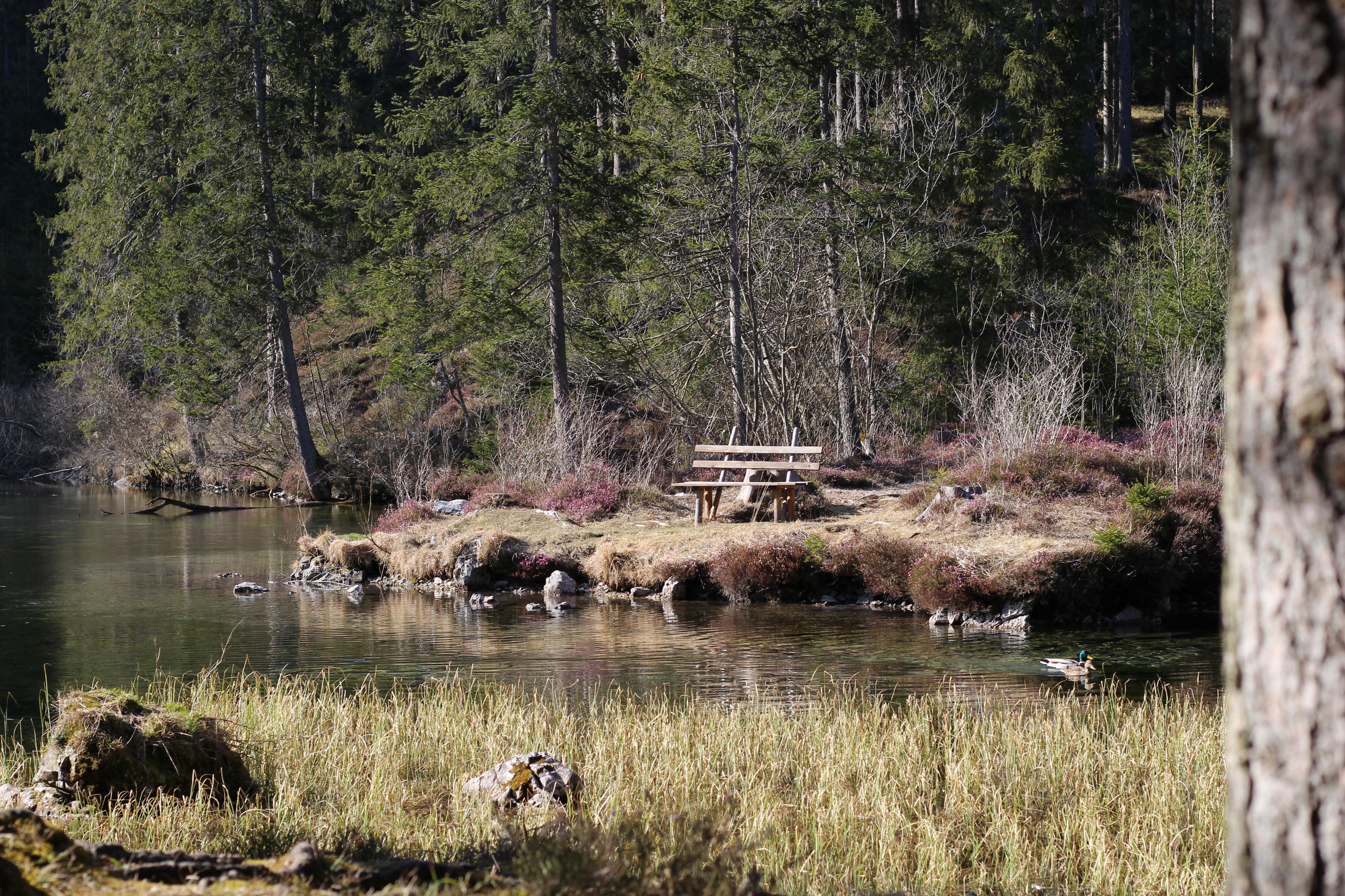 Grüner See Teich 2