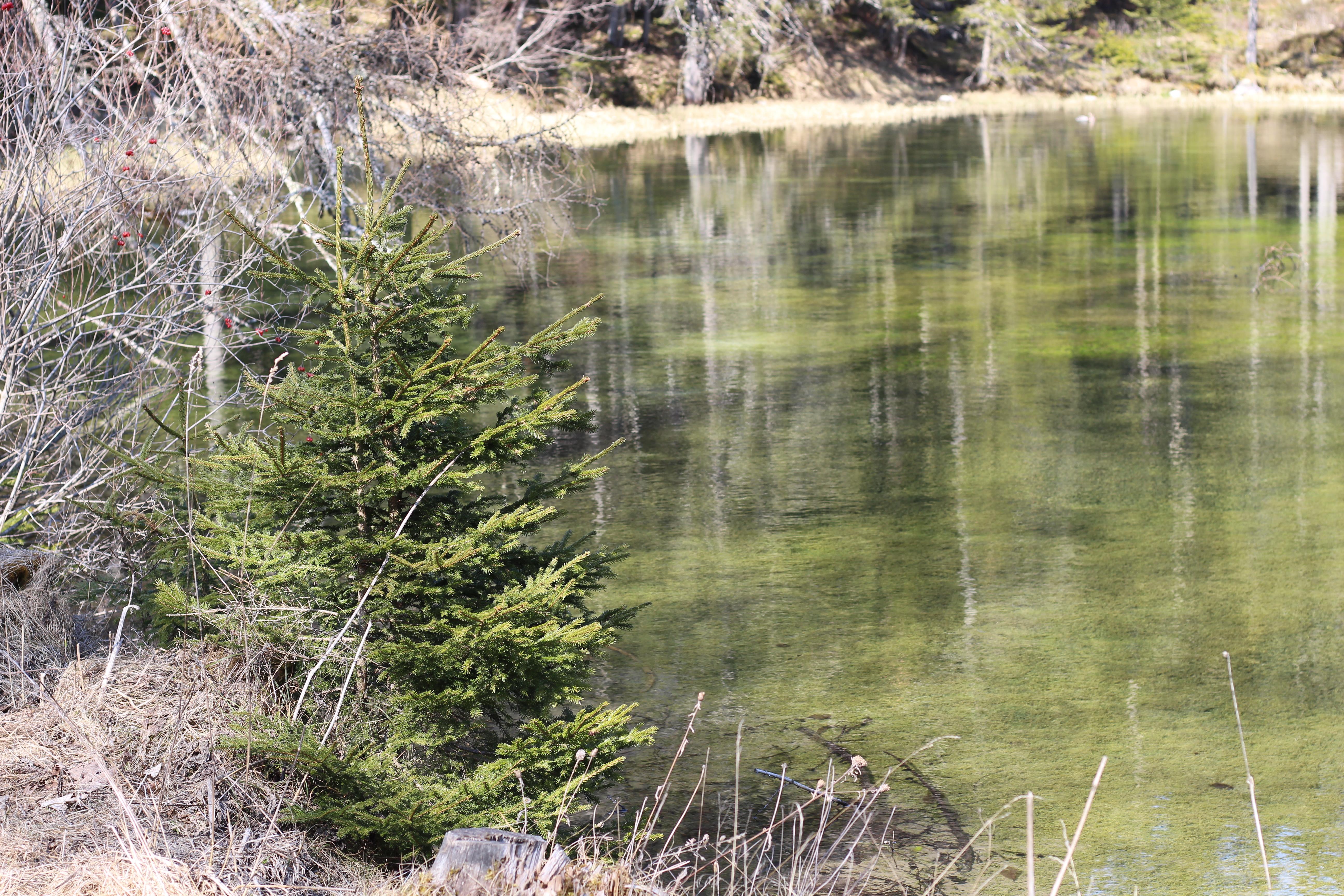 Grüner See Teich