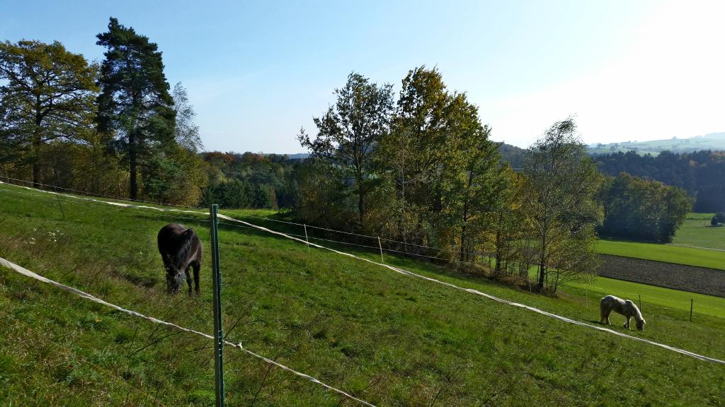 Herbst Pferde 2
