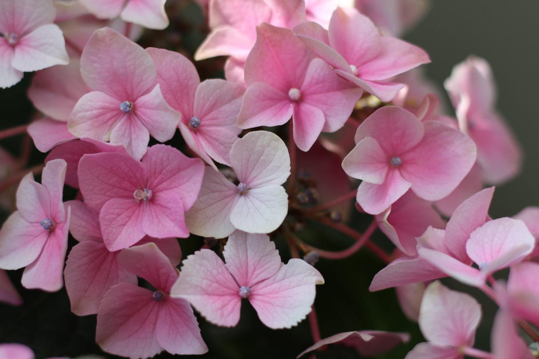 HomeSpa Blumen