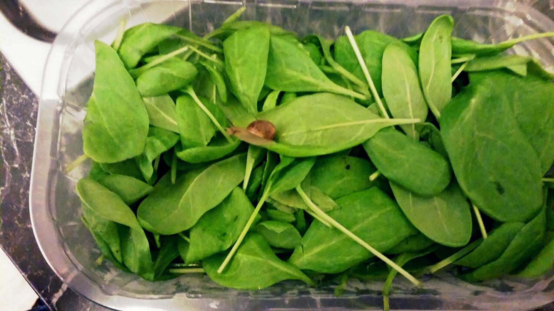 Spinat Schnecke