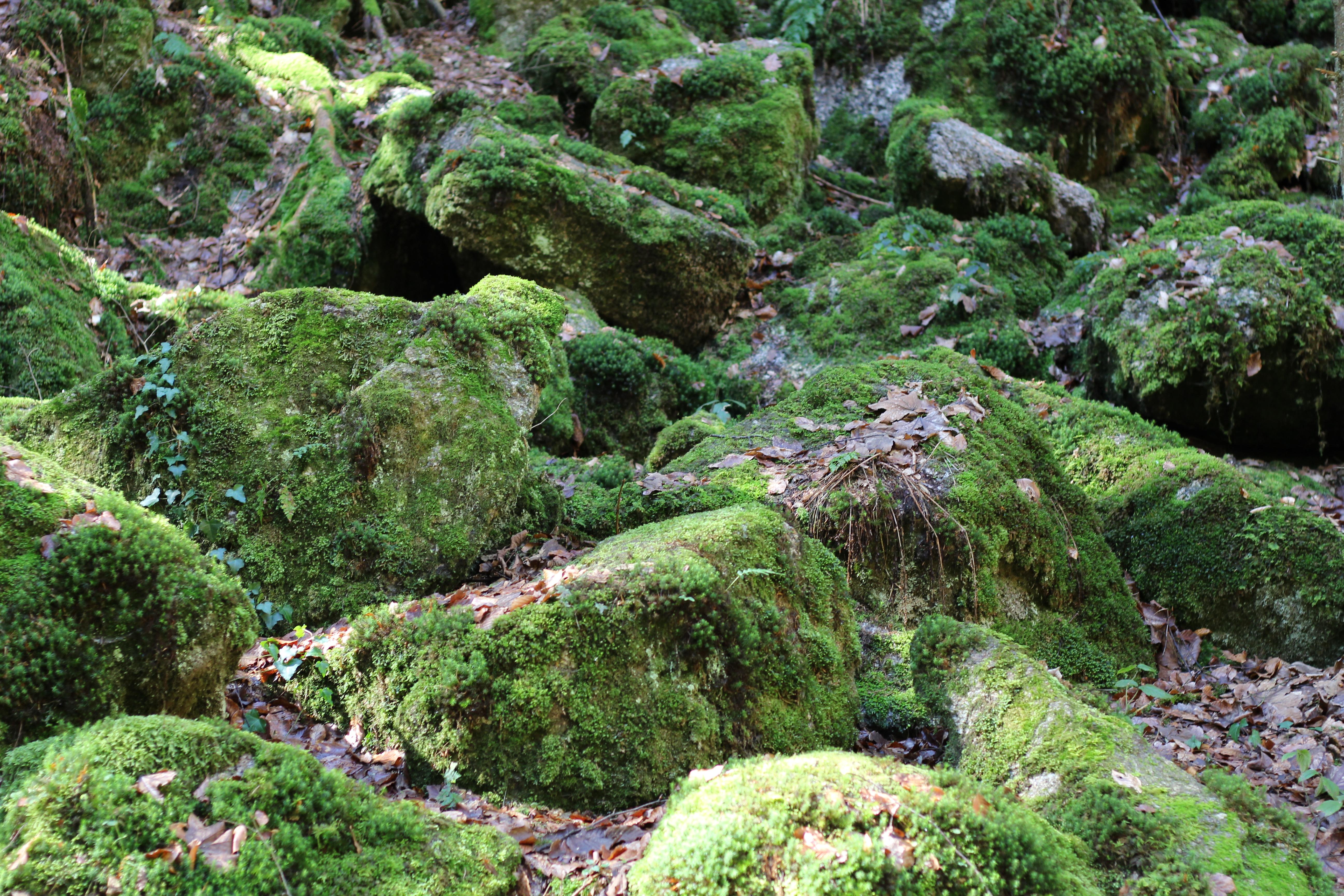 Stillensteinklamm Waldboden