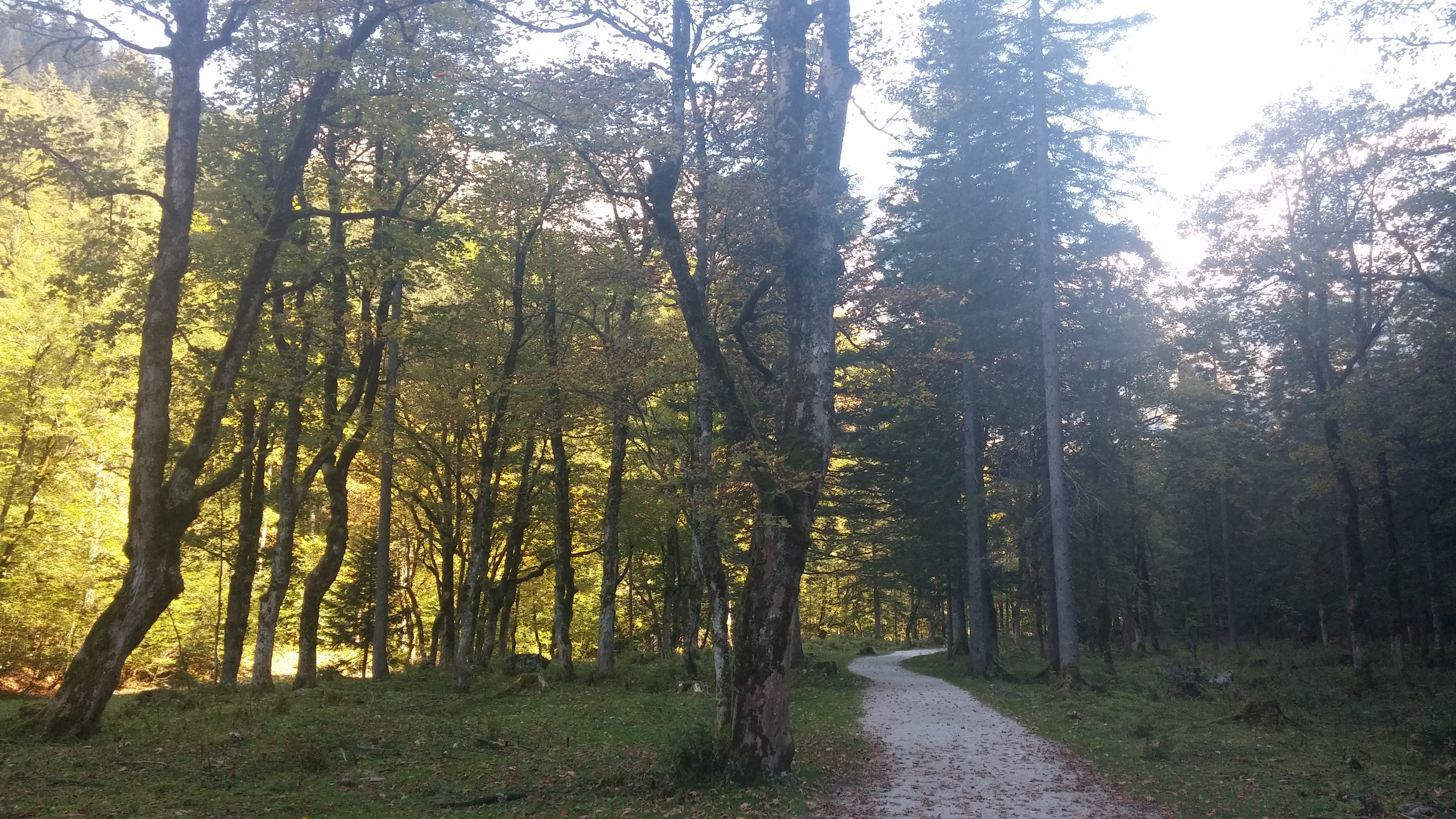 Wanderweg Hinterer Gosausee