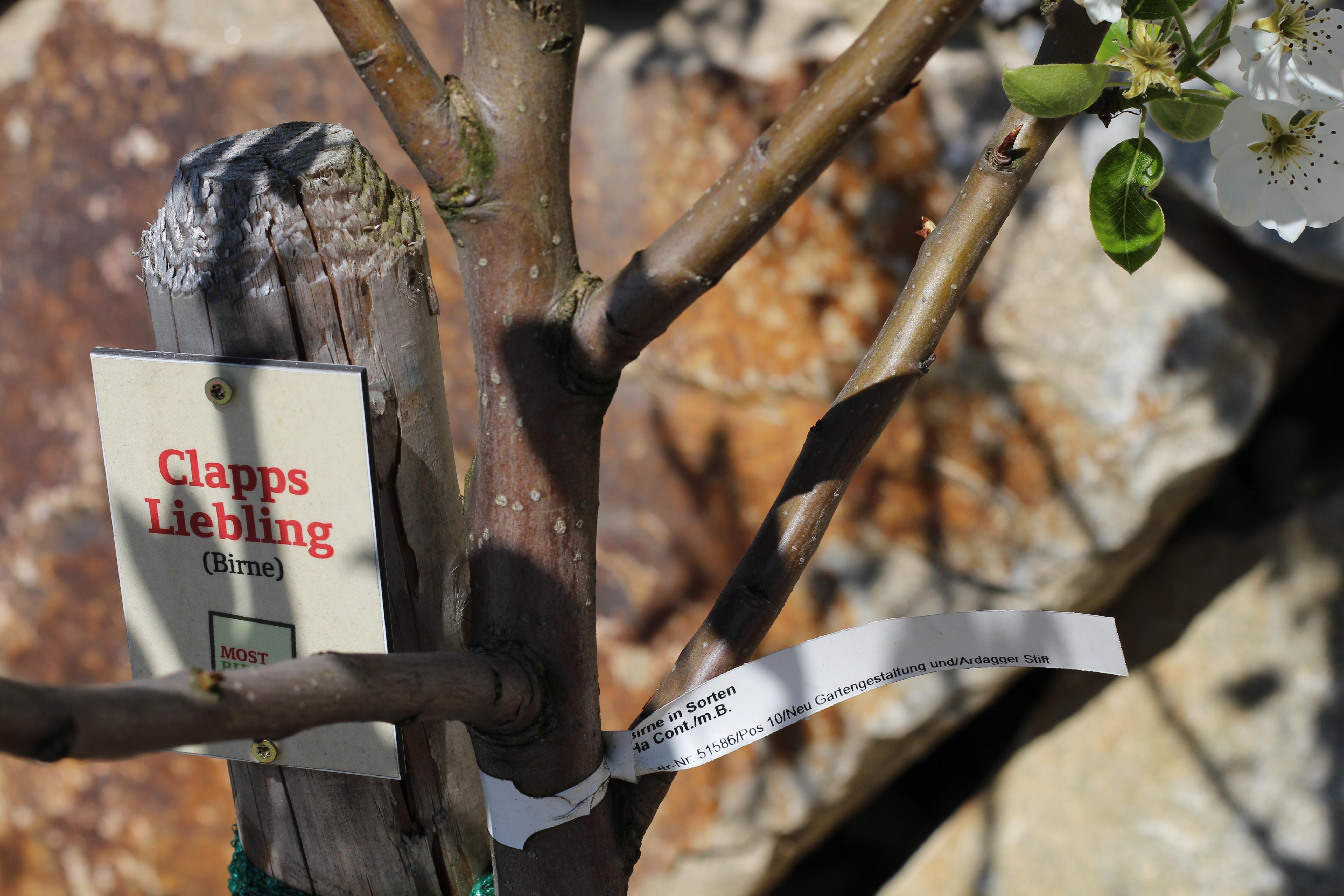 Mostbirnhaus Clapps Liebling