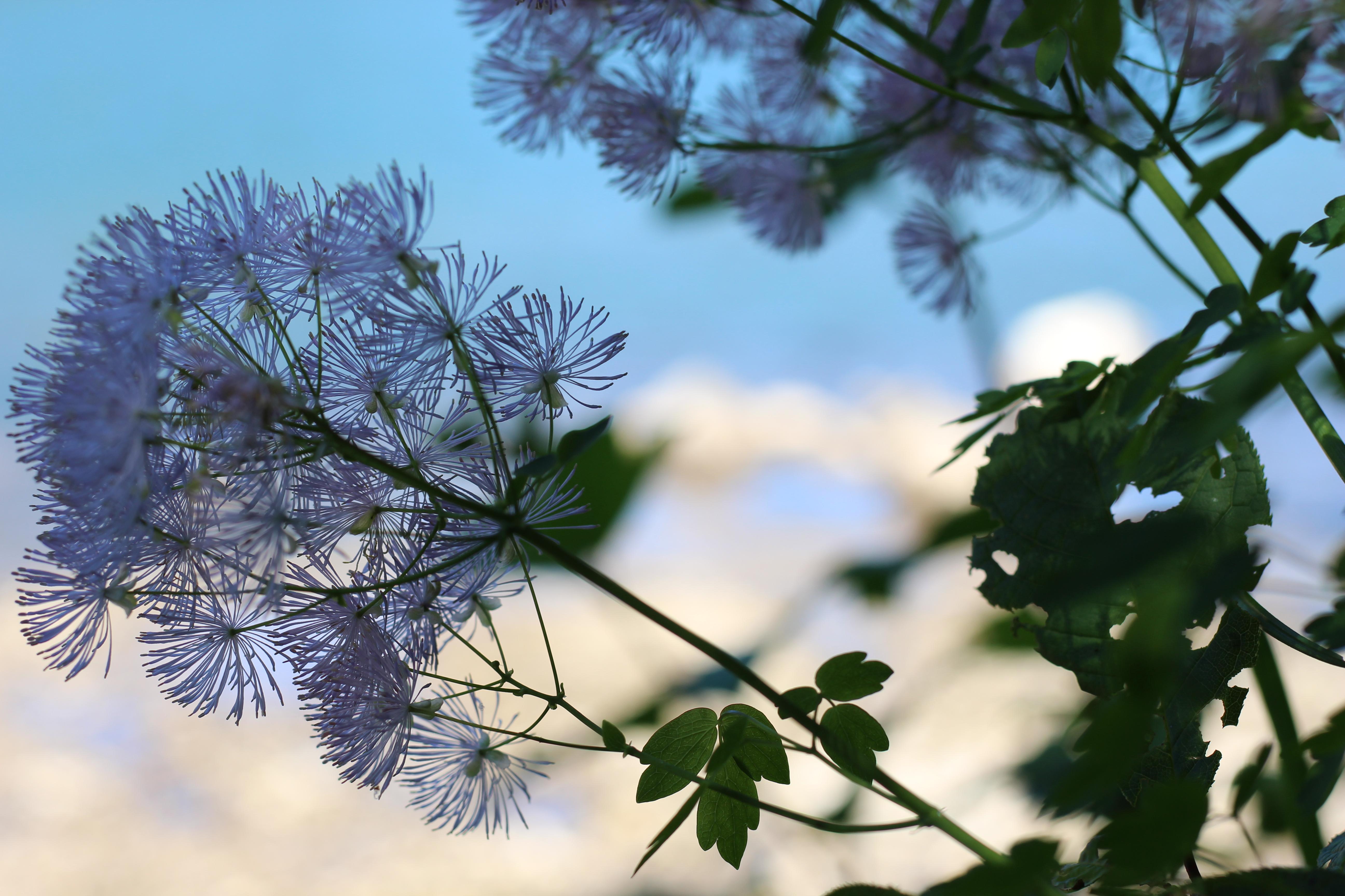 Lunz am See Pflanzenseele