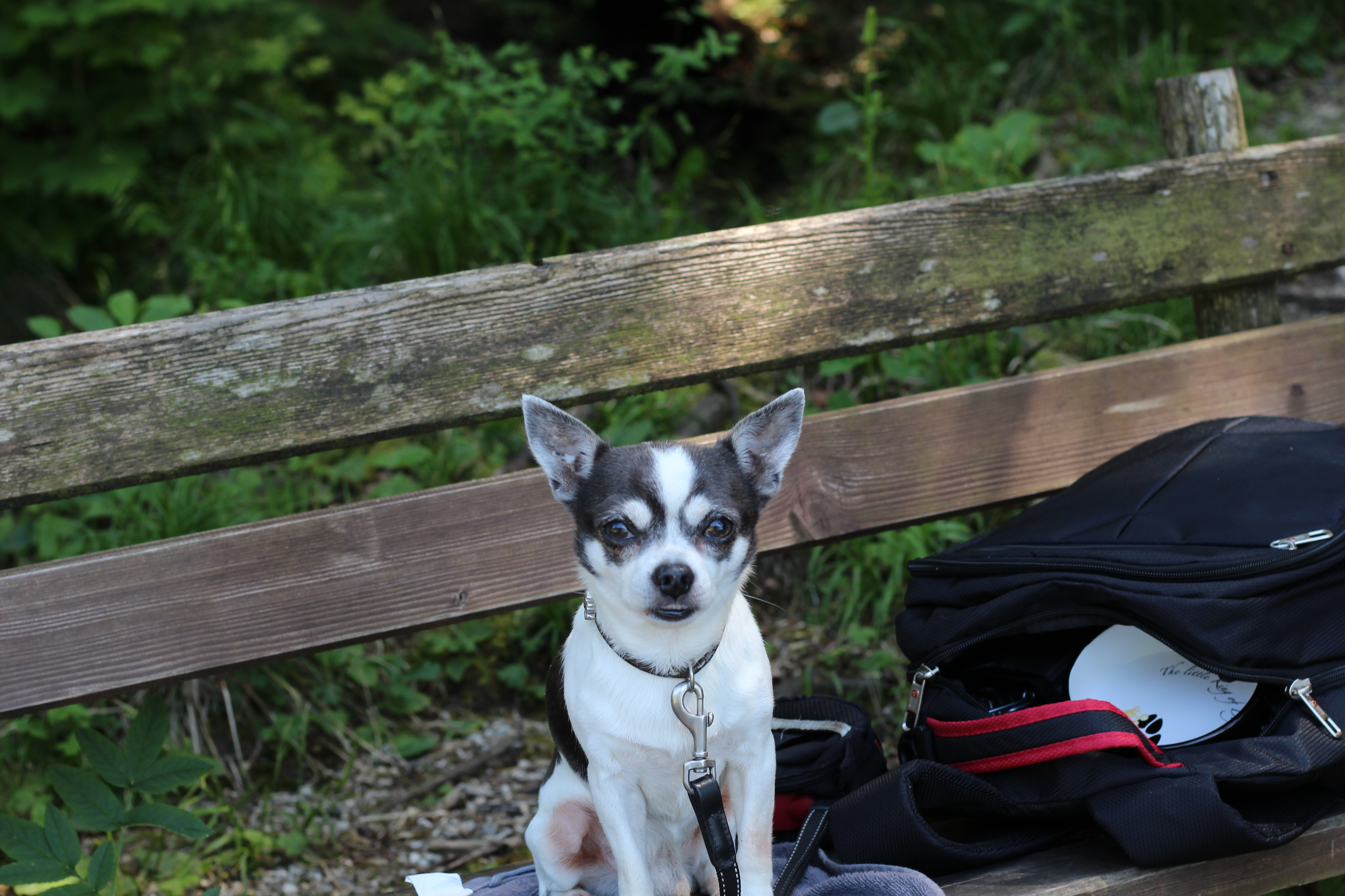 Lunz am See Sir Henry the Chi Wanderzeit