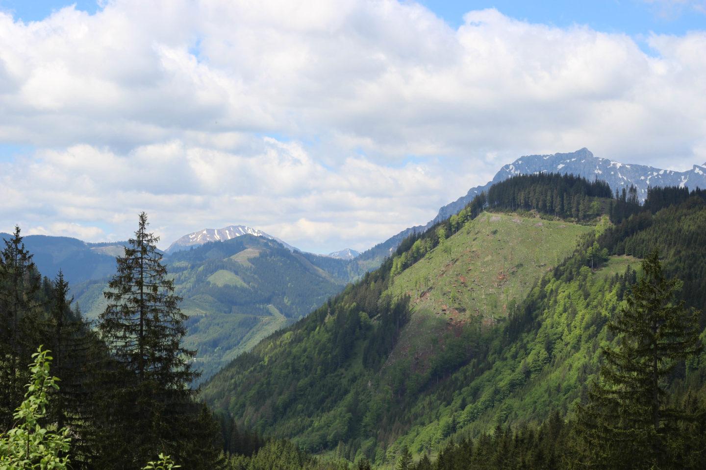 Almglück in den Eisenerzer Alpen