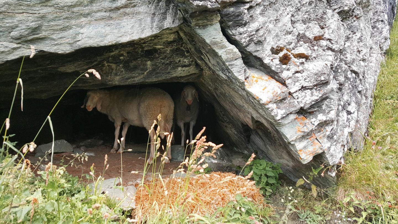 Wanderurlaub im Innerkratzerhof in Osttirol