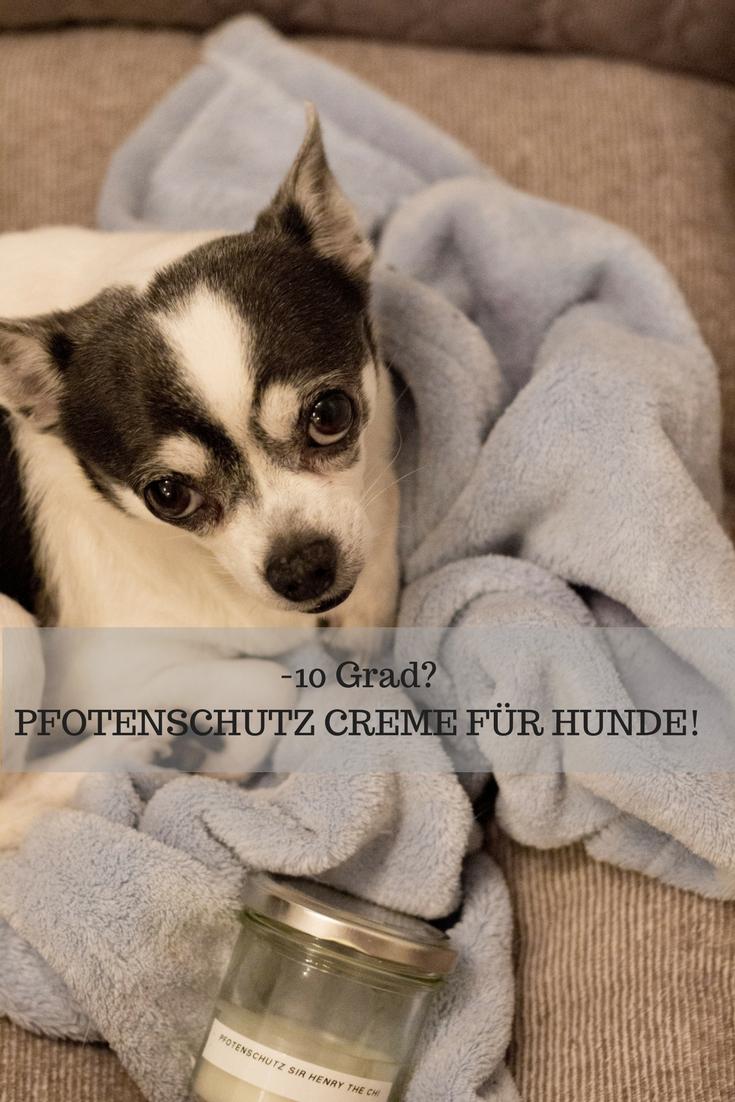 HomeSpa, Vegan Cooking, Austria, Pfotenschutz für Hunde