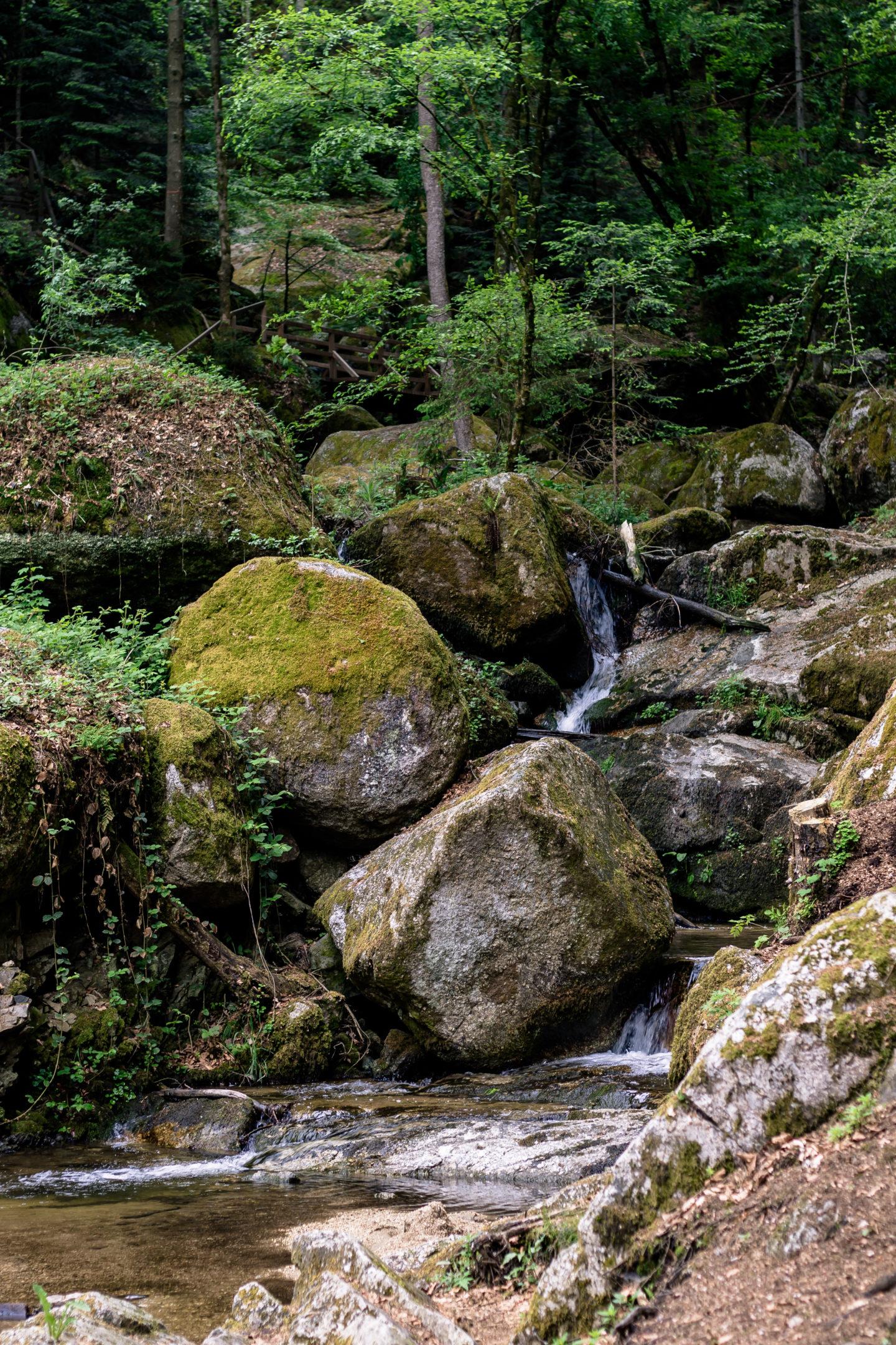 Die Wolfsschlucht in Bad Kreuzen - Eine mystische Felsenschlucht voller Abenteuer!