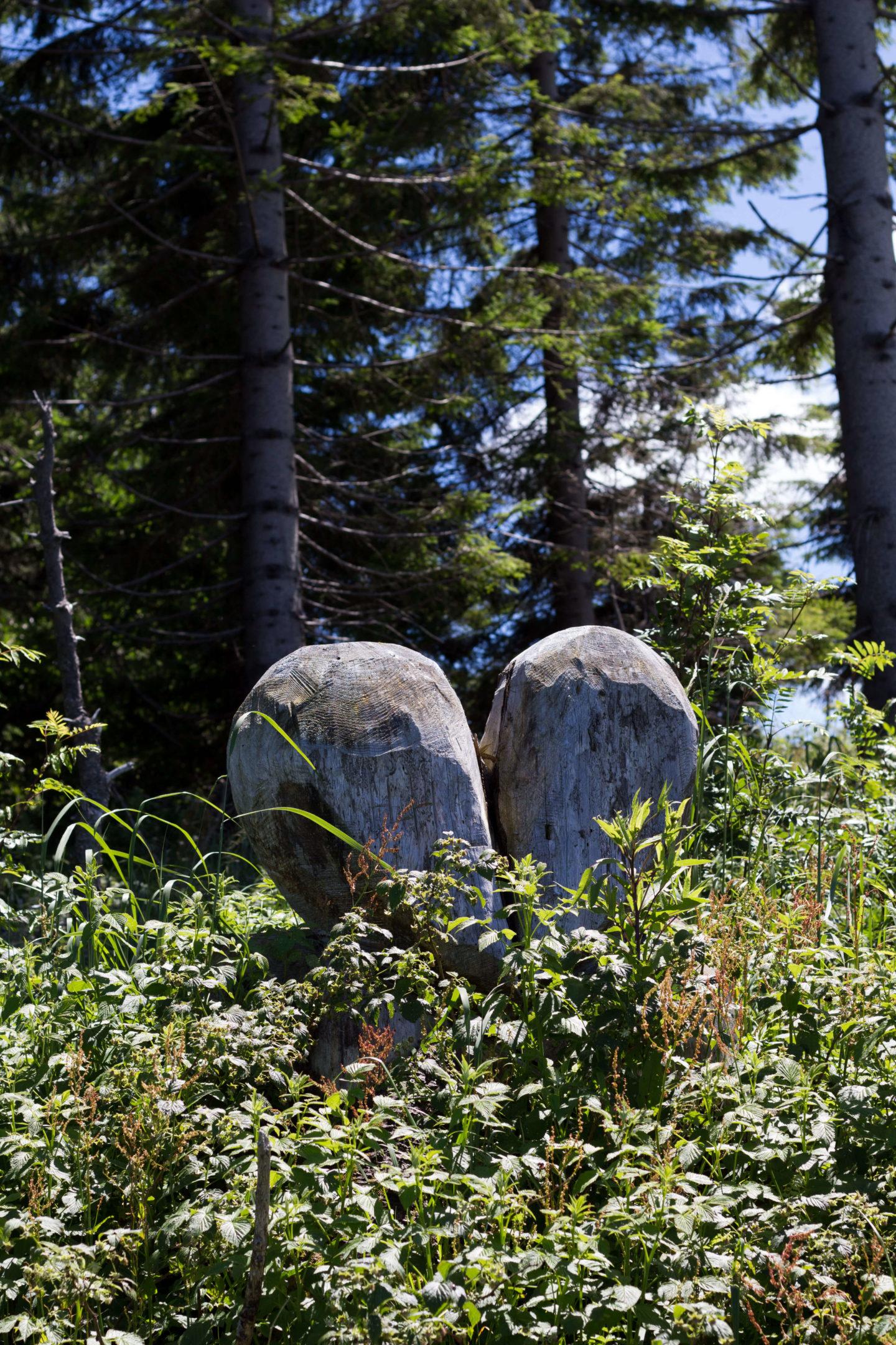 Wanderung von Wastl am Wald zur Anna Alm!