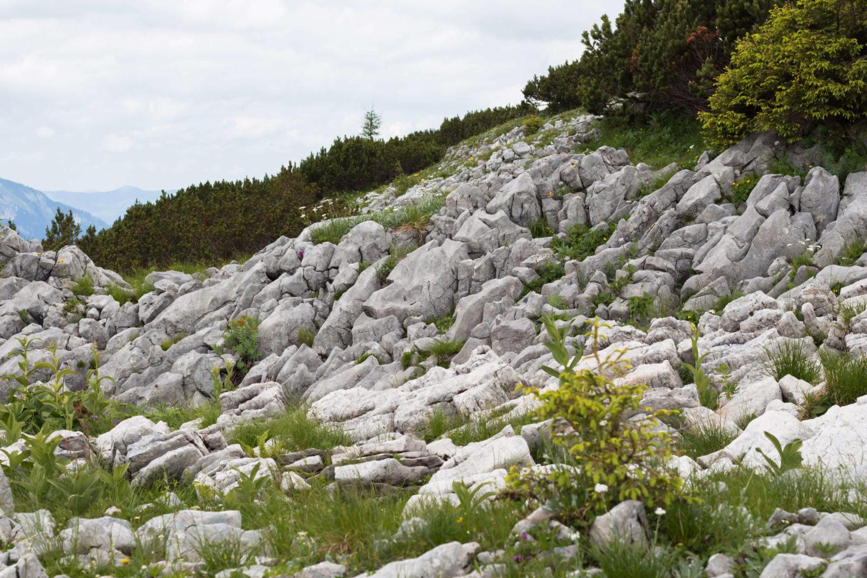 Wandern am Hochkar - Über den Scheinecksattel zum Gipfel!