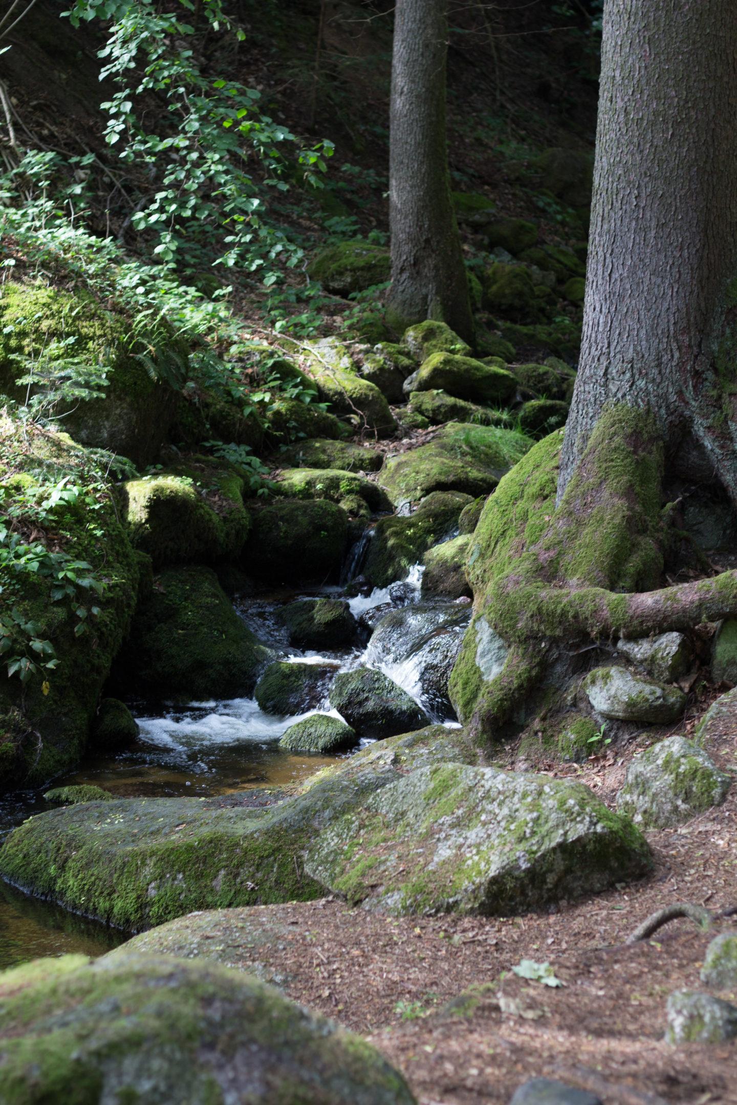 Die Ysperklamm - ein Druidenschatz mitten im Waldviertel!