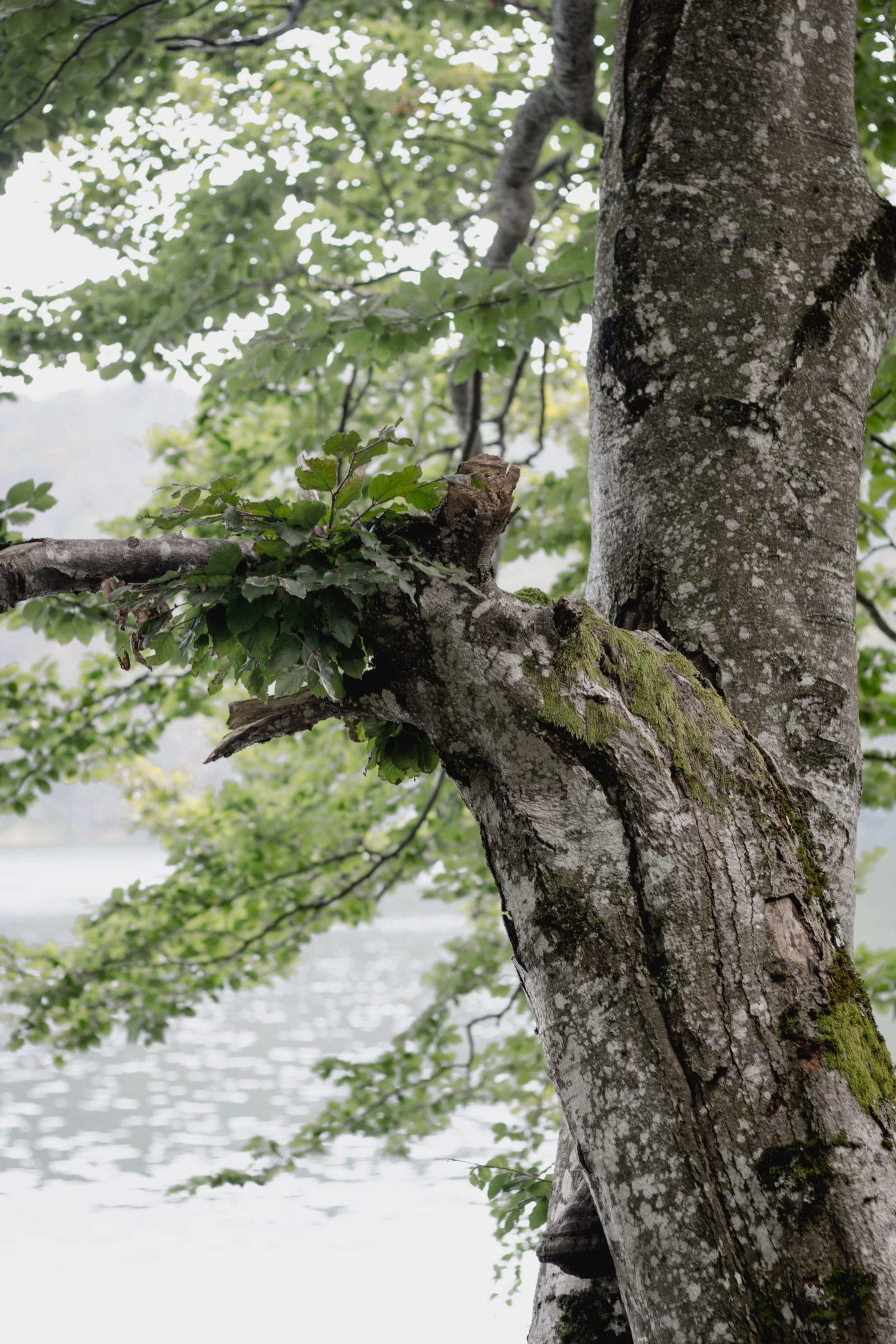 Von Franzl im Holz zum Laudachsee