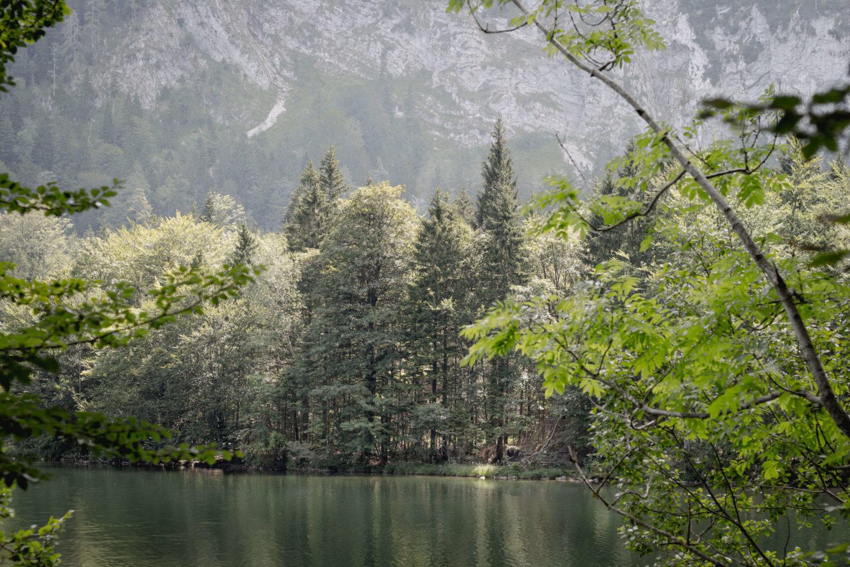 Vom Franzl im Holz zum idyllischen Laudachsee…