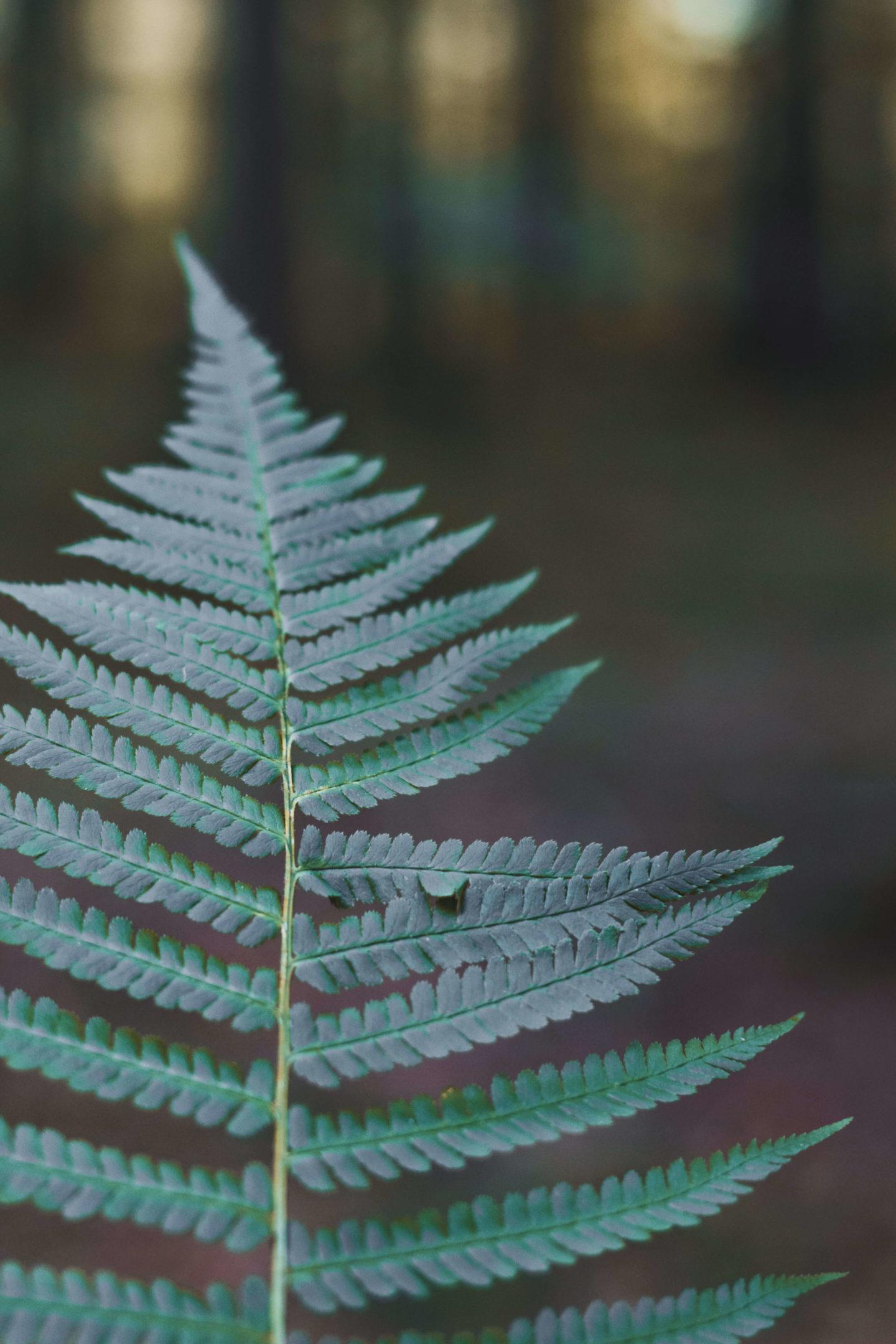 5 Hygge Ideen für einen gemütlichen Herbstspaziergang-Taferlklaussee