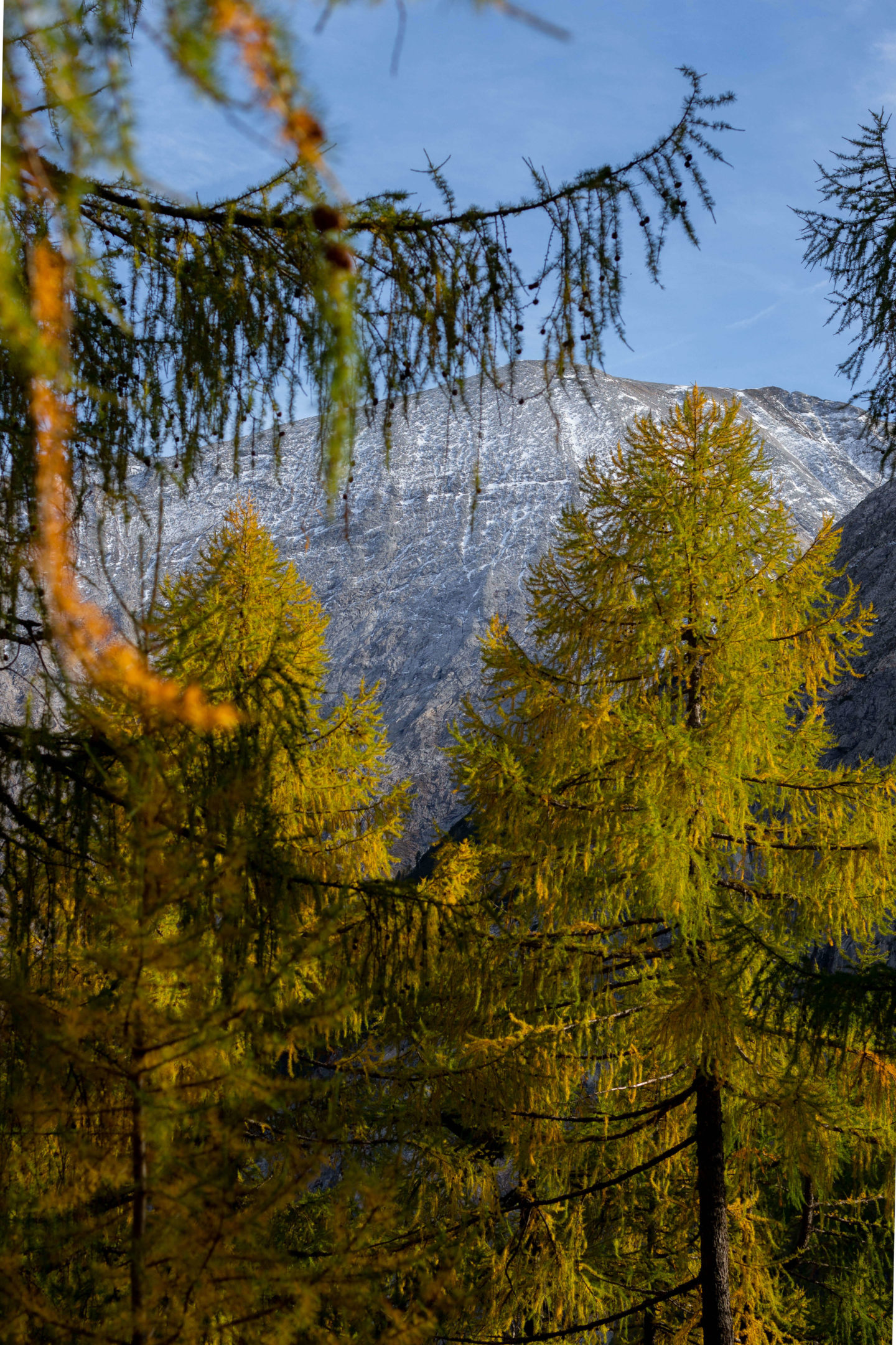Wandern im Lungau. Im Naturpark Riedingtal Zederhaus. Am Tauernhöhenweg Abschnitt zwischen Jakoberalm und Franz Fischer Hütte. Am Bild: goldene Lärchen und Bergipfel. Foto by www.Dein-HomeSpa.com