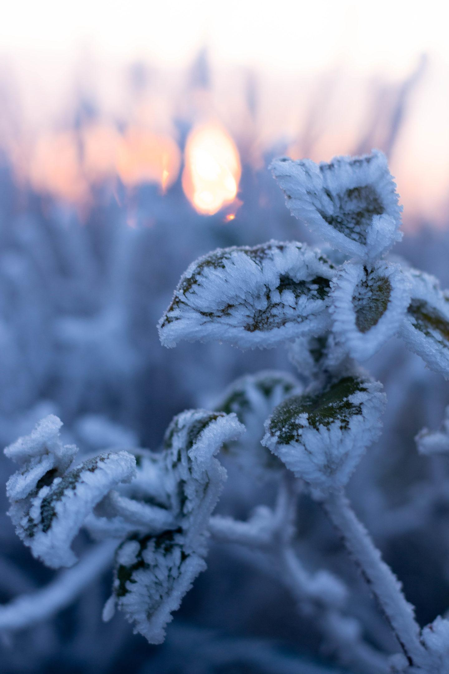 Wintertag-Sonnenaufgang-Mostviertel- Frost- Frosty Winter-Dein Homespa- Food & Wohlfühlblog aus dem Mostviertel