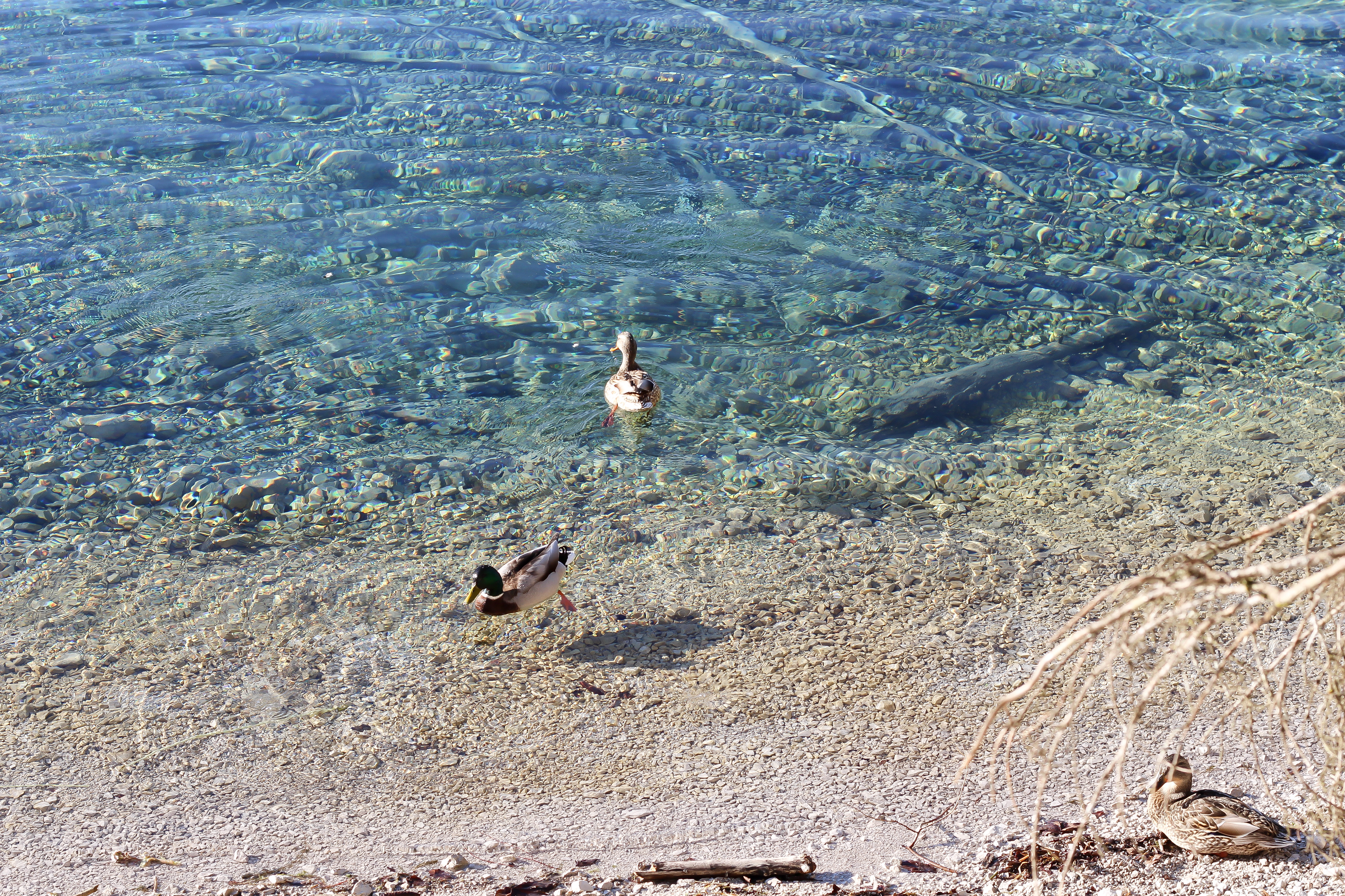 Der Almsee im Salzkammergut - So schön lässt es sich dort Spazieren!